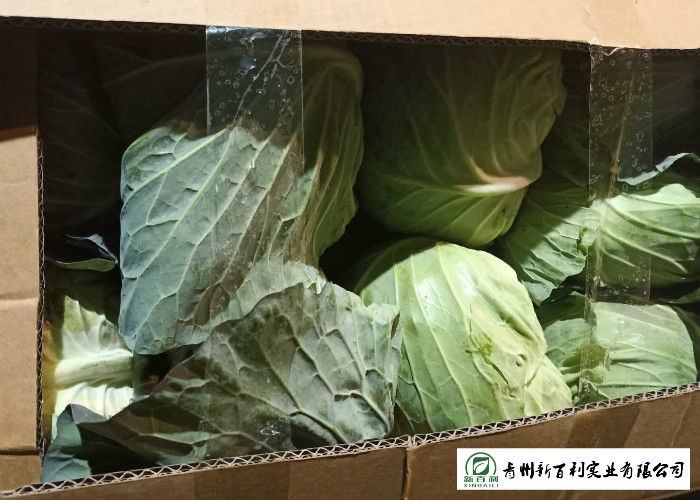 Wholesaler All Season Cabbage Green Color Rich In Vitamin C Easy Stockpile