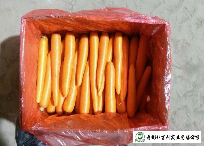 Quality A Little Finger Carrots S / M / L / 2L Size Supply To Supermarket